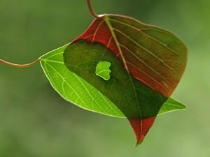 prachtige bladeren